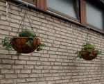 Baskets with some herbs added. The strawberries are already showing signs of being under my care.